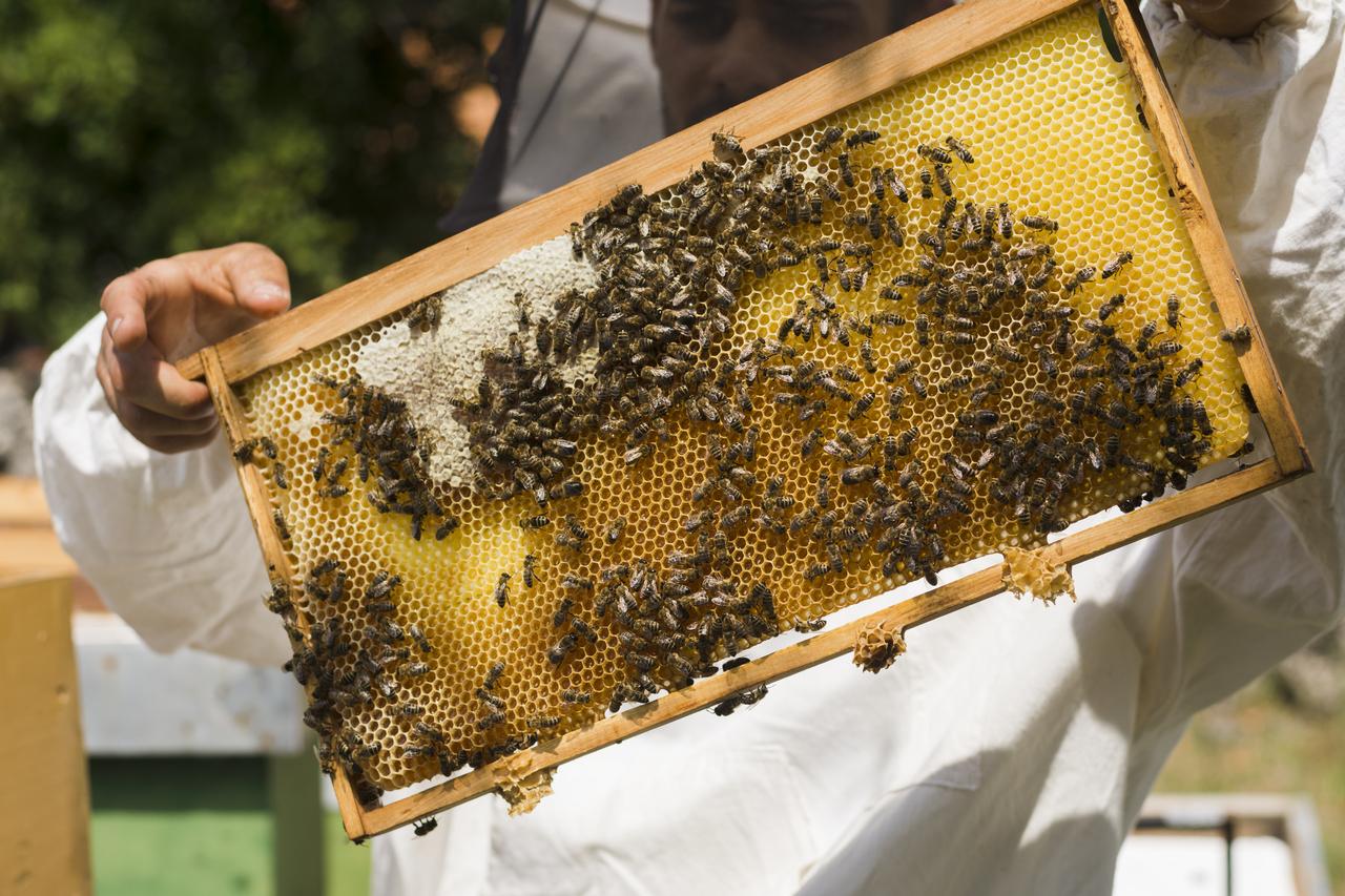 A man showcasing bees in a bee farm