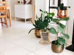 Building Greener Communities: 7 Benefits Of Indoor Plants